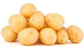 Foto de La superficie de patata en Europa podría descender un 15% en 2021