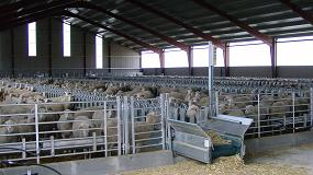Foto de El número de productores de leche de oveja cae a un ritmo del 7,6% anual
