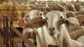 Foto de Agosto acentúa la caída de la producción de leche de oveja con una bajada del 6,3%