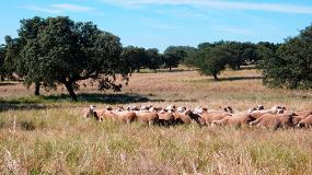 Foto de Reiteran la exigencia de control a la fauna silvestre tras los ataques de lobos a ovejas en Salamanca