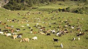 Foto de Alteraciones en los biomarcadores de cabras infectadas por criptosporidiosis
