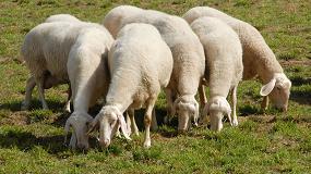 Foto de Subida interanual del 7,7% en la cotización de la leche de oveja