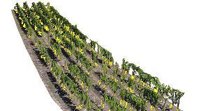Foto de Nuevo software para la gestión tridimensional de viñedos extensos y olivar intensivo y superintensivo