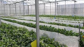 Foto de Investigadores de la UAL logran un control más eficiente de la temperatura en invernaderos