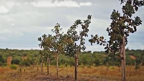 Foto de Olijan: o projeto de olival e pistácio em Serpa