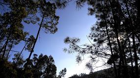 """Foto de """"Houve décadas de desleixo em toda a base do setor florestal"""""""
