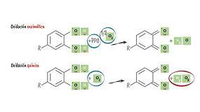 Foto de Aspectos teórico-prácticos sobre la gestión de gases de bajo peso molecular en enología: nuevos desafíos