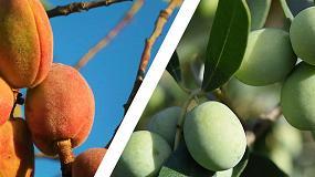 Foto de UPA denuncia que se deje fuera de las ayudas a inversiones a productores andaluces de olivar y almendro en secano