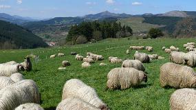 Foto de El otoño reduce el número de ganaderos con entregas de leche de oveja en País Vasco y Navarra