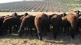 """Foto de Futuro """"incierto"""" para las ganaderías de raza pura en España"""