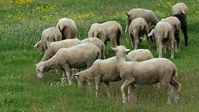 Foto de Proyecto para optimizar el uso de recursos proteicos mediterráneos en la cría de corderos