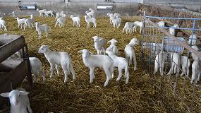 Foto de La fitoterapia es una opción preventiva en el tratamiento de coccidiosis en corderos