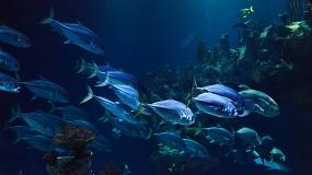 Foto de 14 líderes mundiais comprometem-se a uma gestão dos oceanos 100 % sustentável para resolver desafios globais