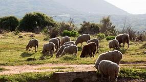 Foto de Ayudas para explotaciones de ovino y caprino de Murcia afectadas por el COVID-19