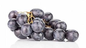 Foto de Mejora de la calidad postcosecha de la uva de mesa mediante la aplicación de tratamientos cortos con altas concentraciones de CO2