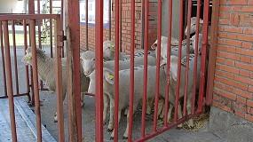 Foto de Celebrado el primer encuentro virtual para la exportación de ganado vivo a Libia