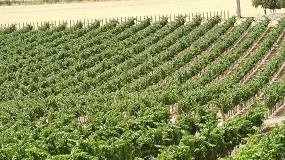 Foto de Nutrición sostenible de suelos en el cultivo del almendro
