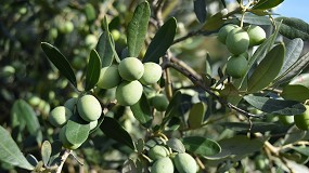 Foto de Nergetic DYNAMIC 22-6-10: o adubo de manutenção, indispensável para o novo ciclo vegetativo do olival