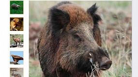 Foto de El Ministerio lanza un Plan Nacional de Vigilancia Sanitaria en la Fauna Silvestre