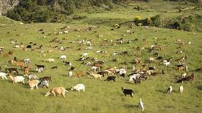 Foto de España espera la respuesta de Bruselas para que todo el territorio sea libre de brucelosis ovina y caprina