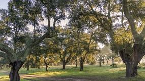 Foto de Florestas.pt lança Academia de formação