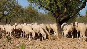 Foto de Tres de cada cuatro explotaciones de ovino de carne tienen pérdidas si se excluyen los pagos desacoplados