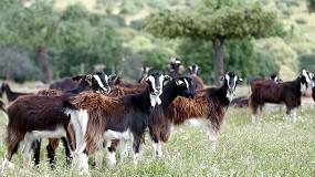 Foto de Bienestar animal y pastoreo se beneficiarán de los futuros ecoesquemas de la PAC