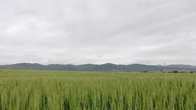 Foto de Xanadu: un nuevo concepto de tratamiento herbicida en el cultivo de cereal