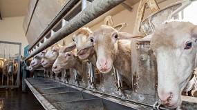 Foto de Jornada online sobre la certificación del bienestar animal en ganado ovino y caprino