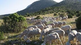 Foto de Inscripción abierta para el primer curso de bienestar animal en la Escuela de Pastores de Murcia