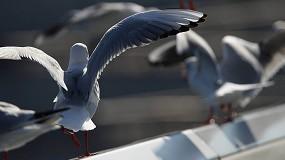 Foto de Cómo deshacerse de las gaviotas gracias a los ahuyentadores por sonido BirdGard