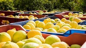 Foto de Ailimpo advierte sobre las alertas sanitarias de limones y pomelos turcos en la UE