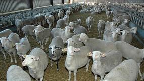 Foto de Las OPLs operativas en el sector ovino de leche agrupan un tercio de la producción nacional