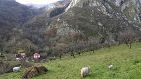 Foto de Cantabria fomenta el ovino y caprino en media montaña para prevenir incendios forestales