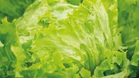 Foto de La UPNA investiga la producción de hortalizas sin nitratos en sus hojas comestibles