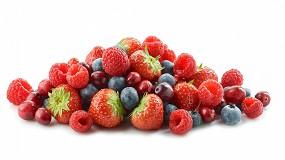 Foto de Proyecto BreedingValue: frutos rojos más nutritivos y resistentes