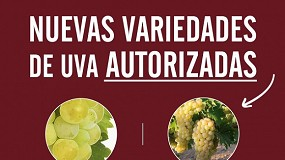 Foto de Moscatel y Albillo Real, nuevas variedades de uva admitidas en la DO del Vino de Toro