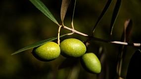 Foto de INE: redução de 25% na produção de azeitona