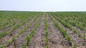 Foto de Agricultura de Conservación: eco-esquema en la nueva PAC por sus beneficios mediombientales