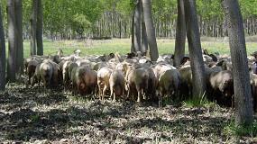 """Foto de ASAJA afirma que la ganadería es la """"gran víctima"""" de la convergencia de la PAC con recortes del 14% al 18%"""