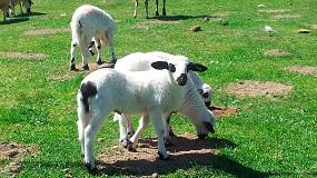 Foto de El descenso en las principales regiones productoras hace caer un 7% anual el volumen de carne ovina