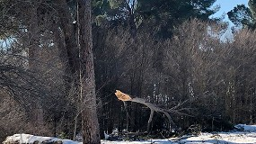 Foto de Se incrementa el riesgo de incendios forestales en 2021 tras el paso de Filomena