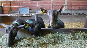 Foto de El precio del concentrado de cabras lecheras se incrementa un 3,2% en el mes de enero