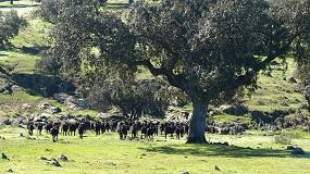 Foto de España ya es oficialmente indemne de brucelosis ovina y caprina en todo el territorio peninsular