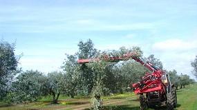 Foto de A mecanização da poda do olival