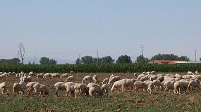 Foto de Bután, Israel y Rusia mantienen brotes activos de la viruela ovina y caprina