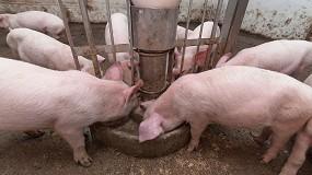 Foto de El coste de los piensos en porcino sube alrededor de un 20% en el último semestre