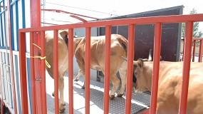 Foto de El Ministerio cambiará la normativa de transporte de animales para asegurar el bienestar