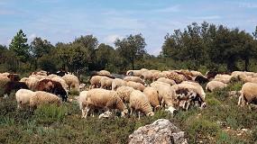 Foto de El censo de ovino sube en el sur peninsular a costa de descensos en las regiones del norte