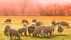 Foto de Desarrollan un sistema de protección del ganado ovino en semilibertad frente a ataques de depredadores